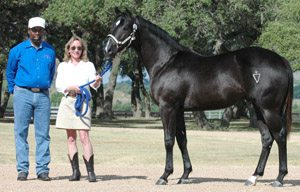 julianna holt horses