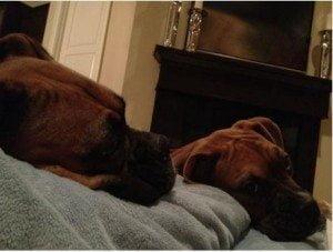 Gary woodland boxer dogs