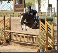 Erin Stiegemeier Walker Horse jumper pic